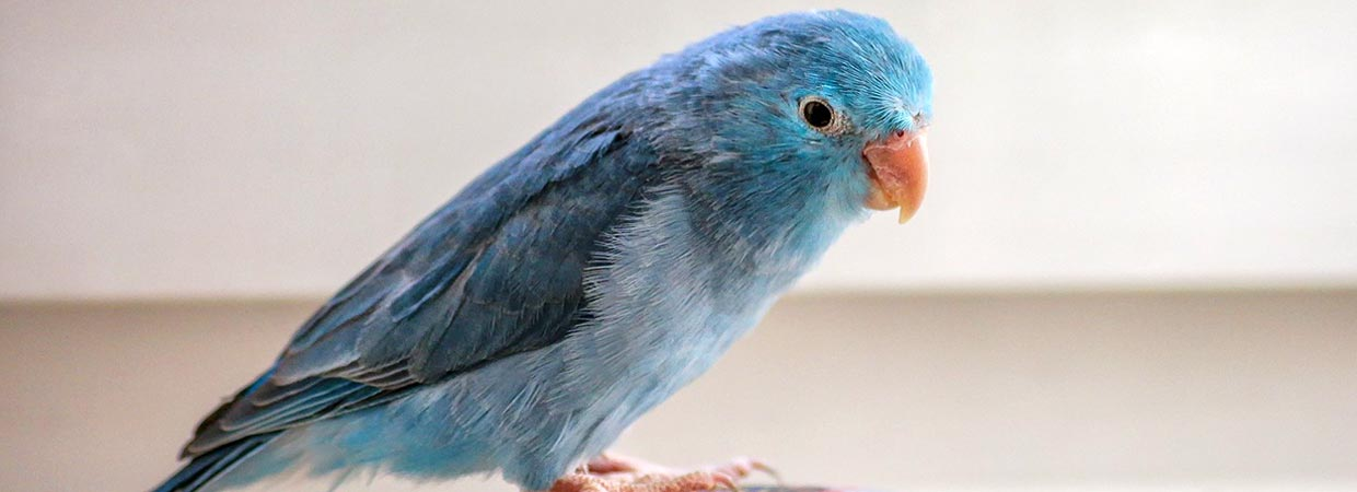 Blue Bird Names