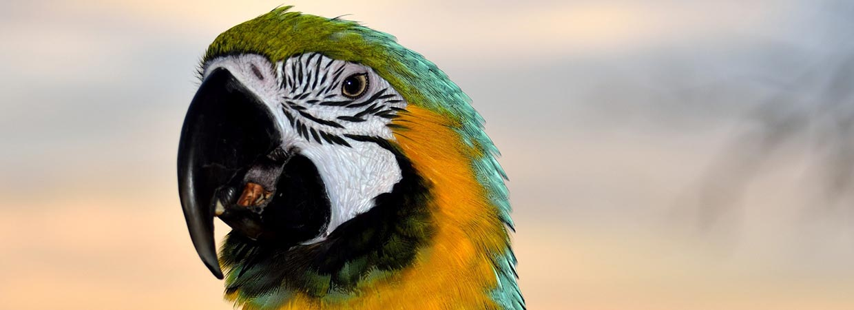 Cool Bird Names - Green And Yellow Macaw