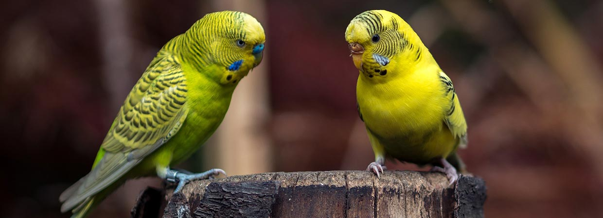 Yellow Bird Names