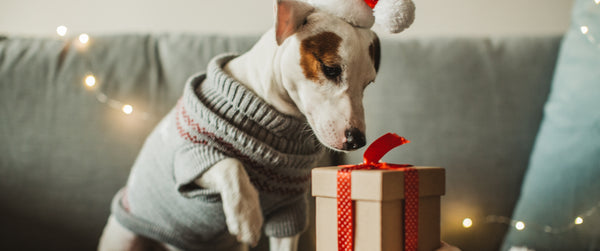 A dog opening a present during Christmas holiday
