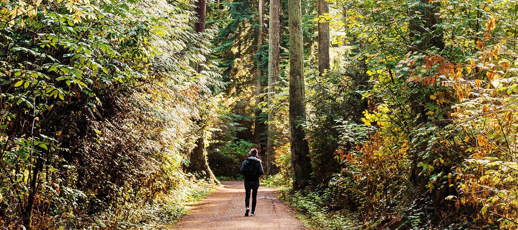 Image of person walking through the woods.