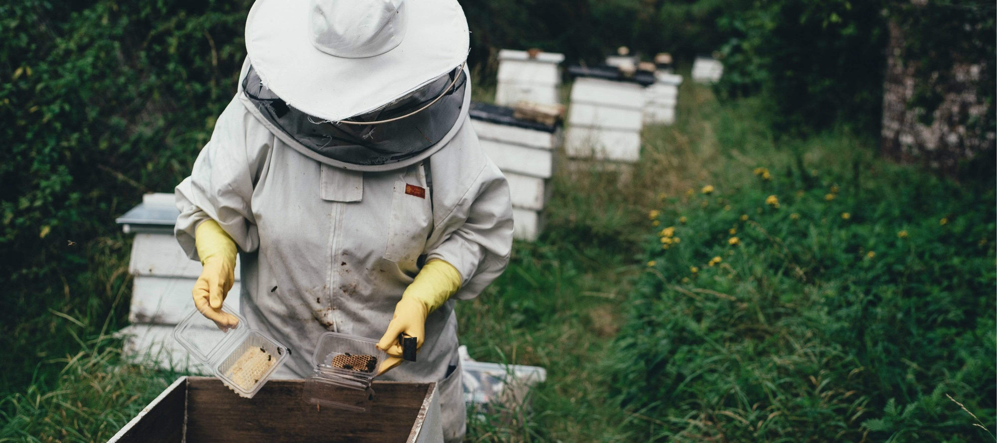 Meet our Beeswax Farmer
