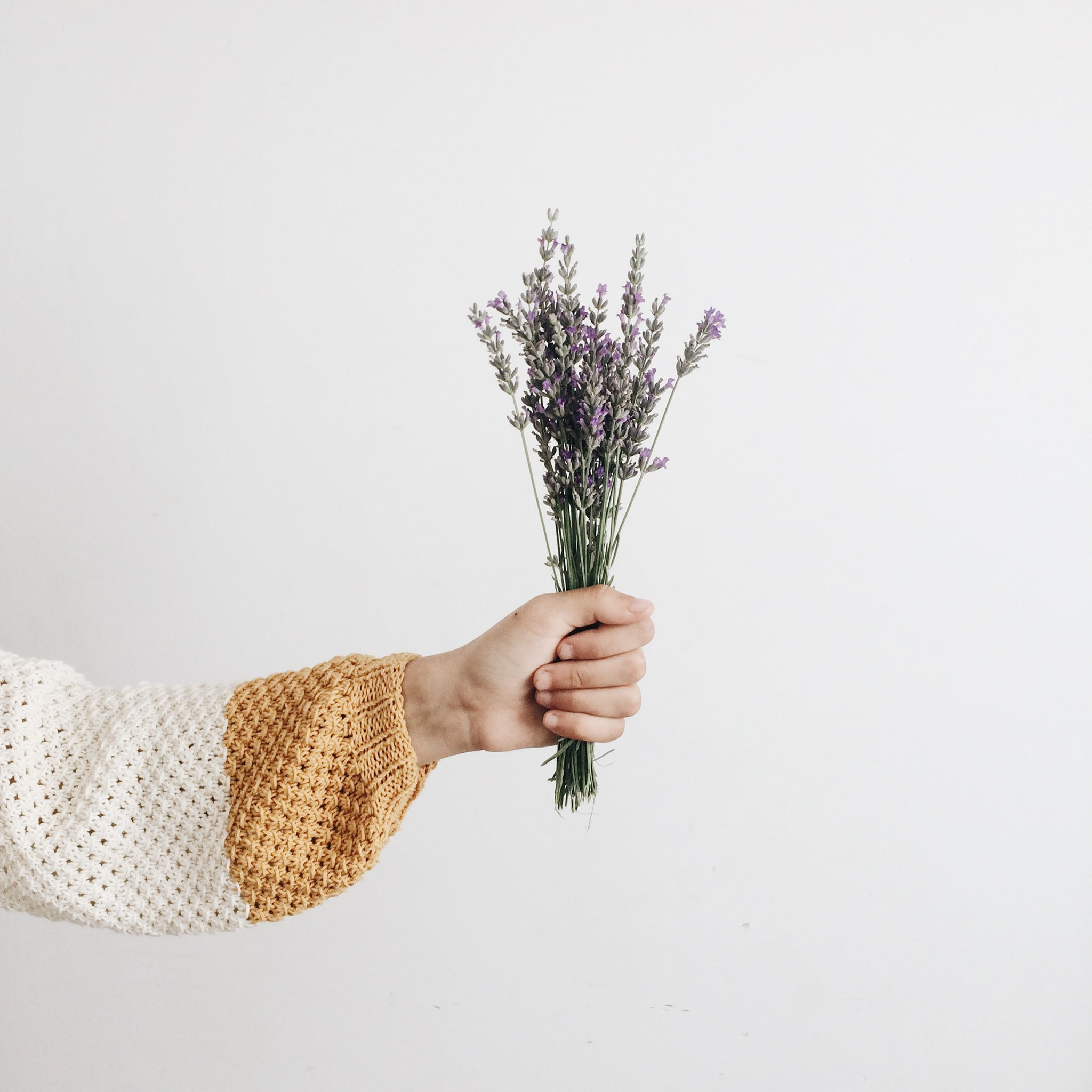 image of hand holding a bouquet of lavender.
