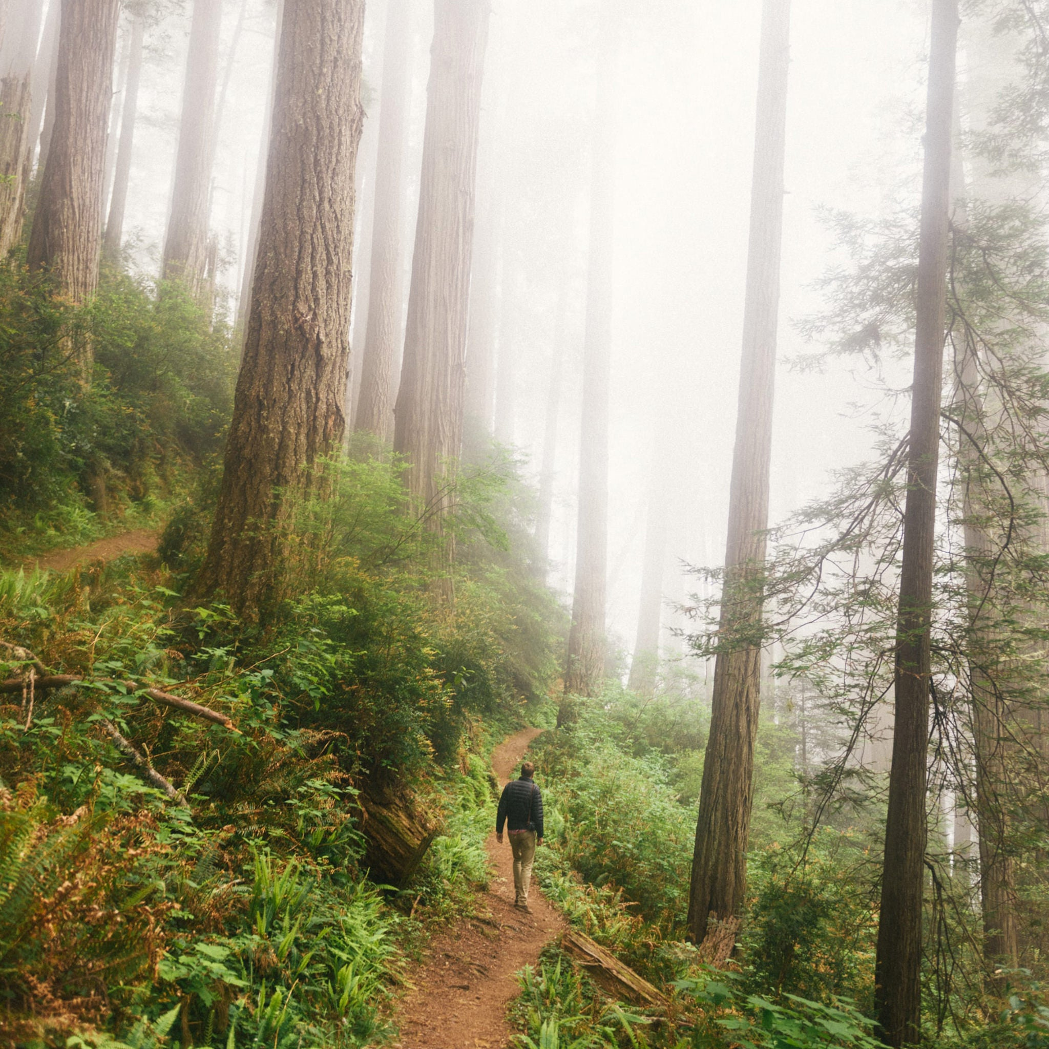 Image of person walking through a misty forest.