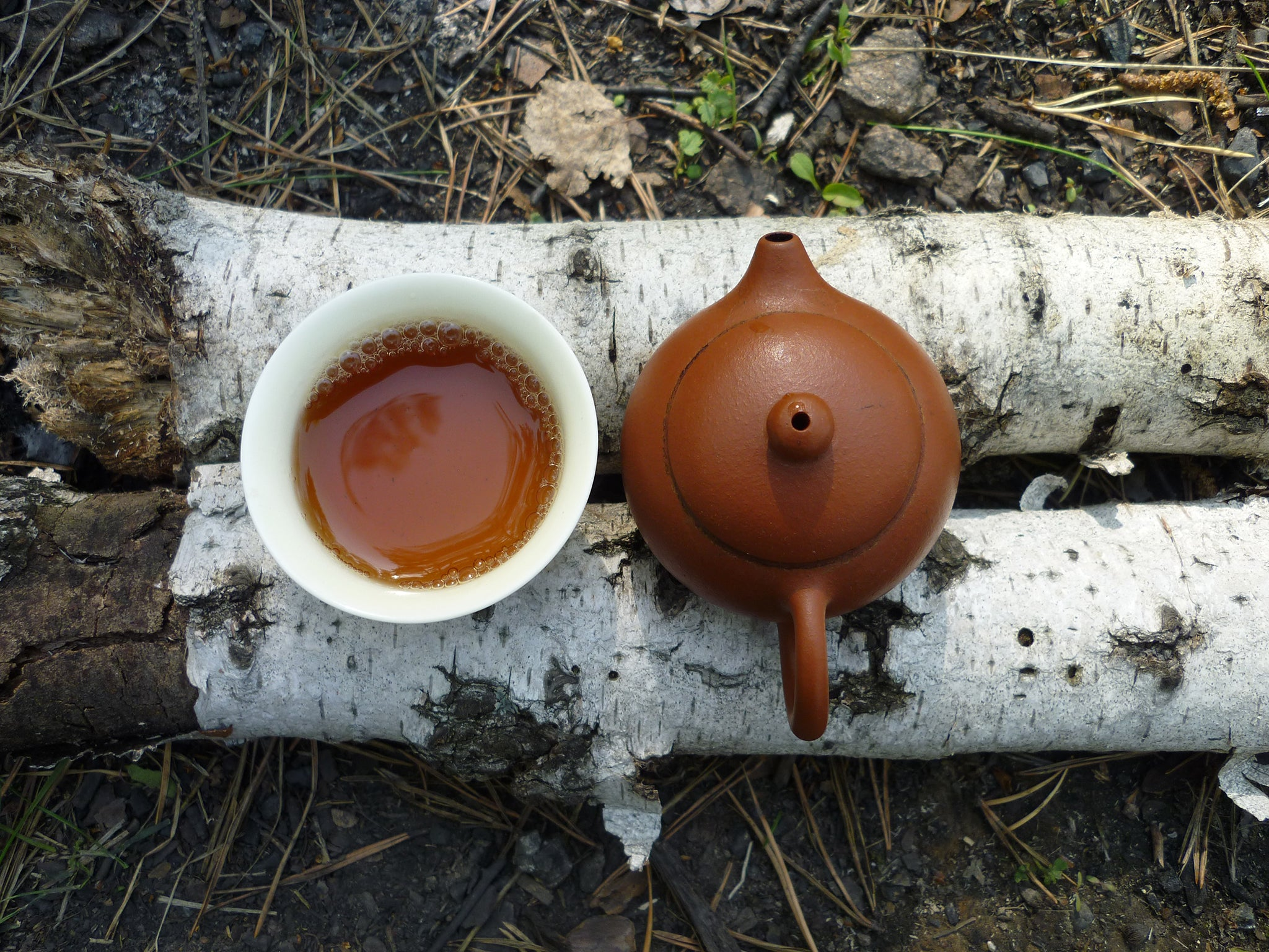 tea set on a log as part of a forest bathing tea ceremony.