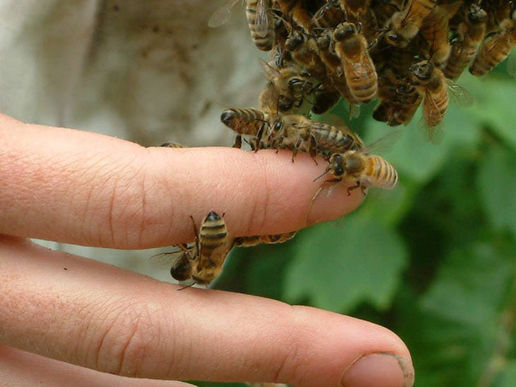 Bees and Natural beekeeping