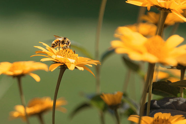 Bees are important to everything from industry to food