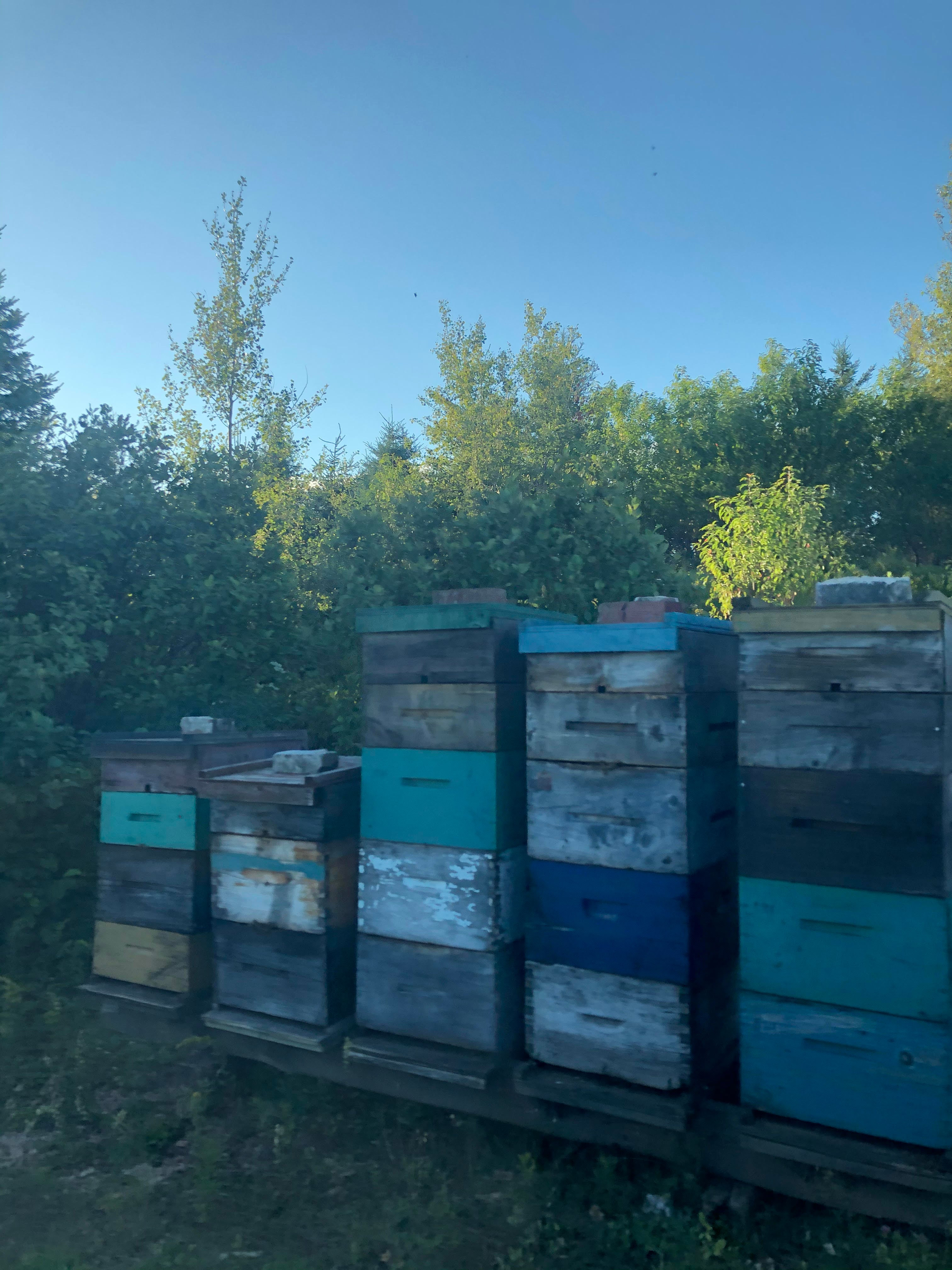 Lily Pond Farms beehives.