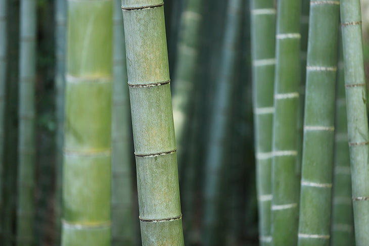 Bamboo is a great natural exfoliant