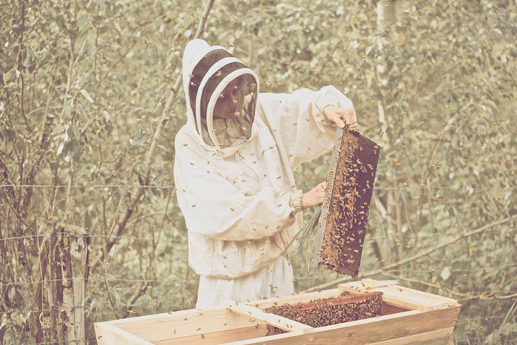 Beekeeping is important