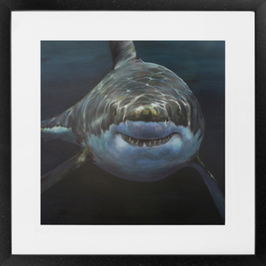 Great White Shark Framed Prints