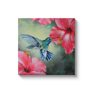 Hummingbird Canvas Wraps