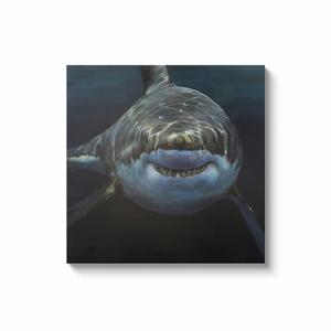 Mary Lee the Great White Shark Canvas Wraps