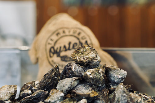 Live, fresh, un-shucked oysters