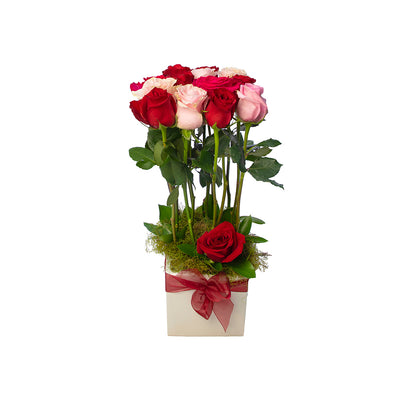 Premium Roses from Mayflower Studio Florist in Marlborough, NZ