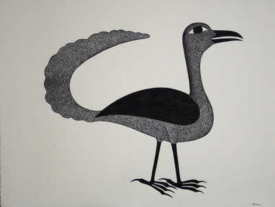 Long-tailed black bird, 1993 - 1994