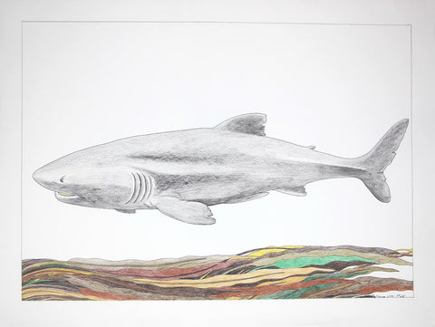 Untitled (Shark), Cape Dorset  2009