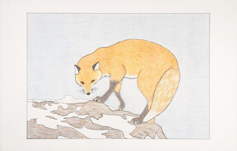 Untitled (Fox)