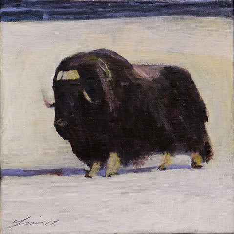 Muskox with Crazy Weather