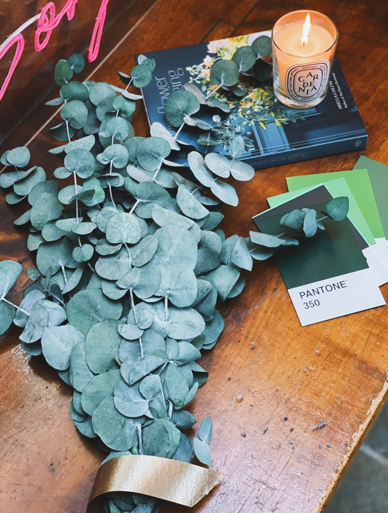 Preserved Eucalyptus Bunch