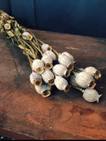 Dried Flowers Papaver (Poppy Heads) Natural