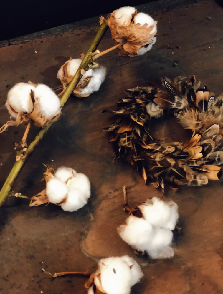 Natural Dried Cotton Stem