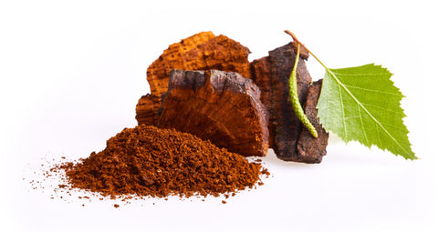 Chaga chunks and powder with a leaf