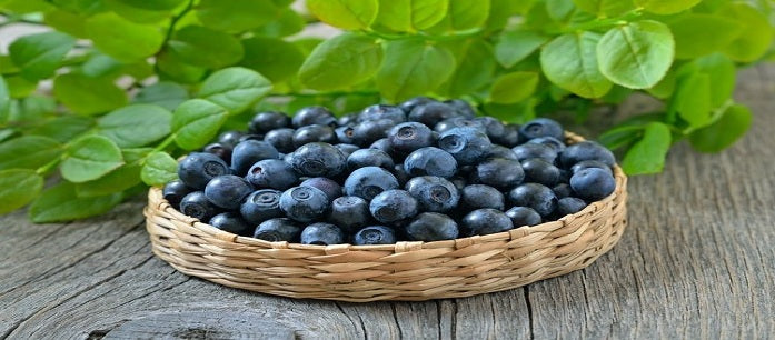 Acai berry is considered as a superfood due to its benefits, but are you getting the most out of this fruit? Learn the various ways to take this product.