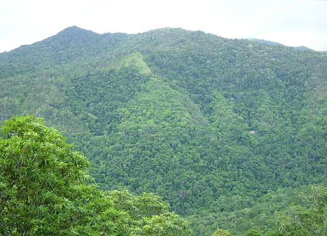 Wide shot of a mountain in a rainforest
