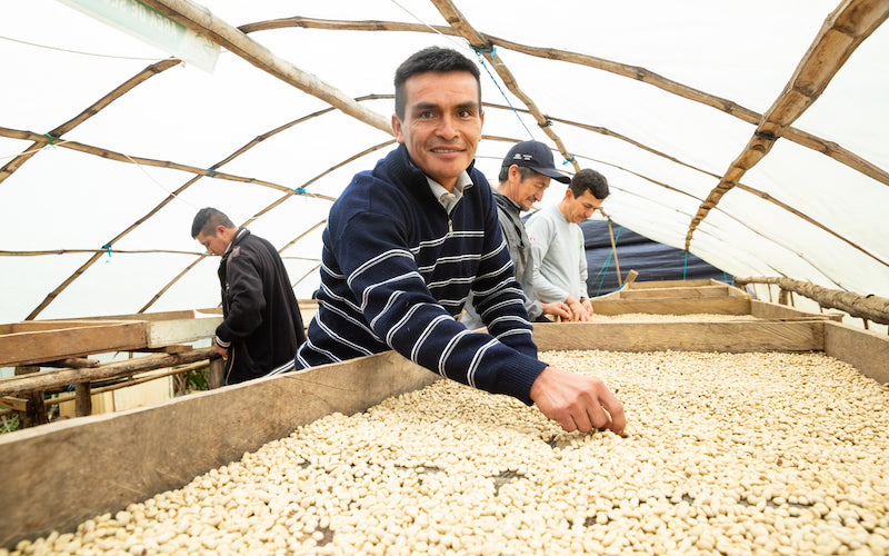 Four men examine coffee beans on a large table, one smiling at the camera