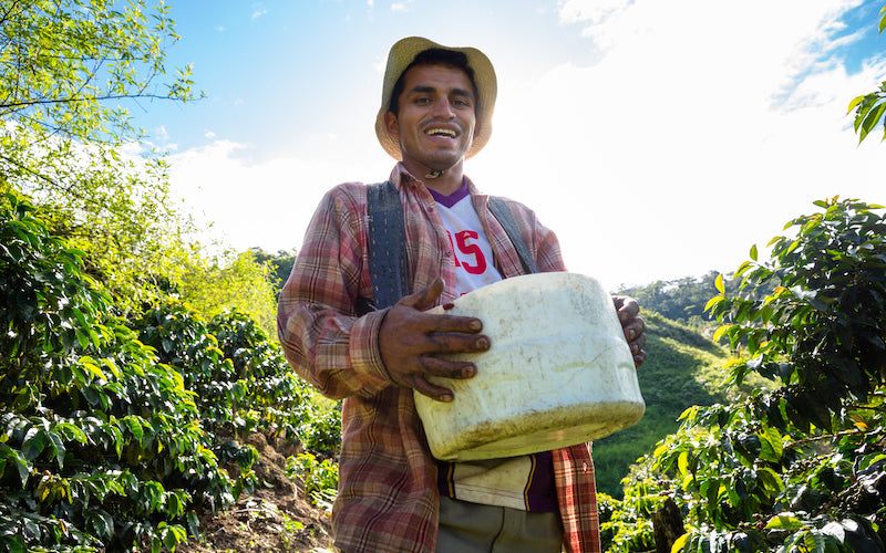 A member of a Fair Trade Certified coffee cooperative carries a white bucket