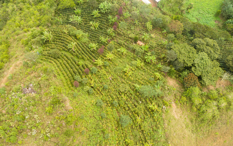 An aerial view of the Miraflores sector of the Fair Trade Certified Selva Andina coffee cooperative.