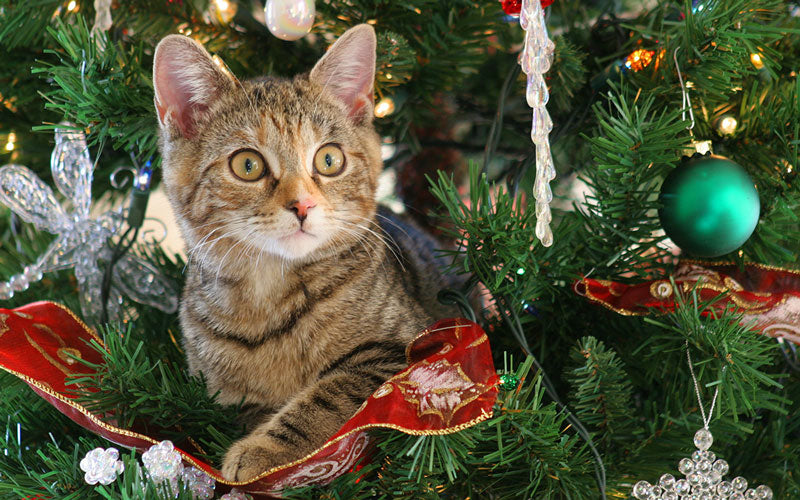 A photo of a brown tabby cat sitting in a Christmas tree