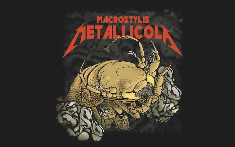 "An illustration of a new crab species named after the band Metallica. Above it, ""Macrostylis Metallicola"" is written as the scientific name"