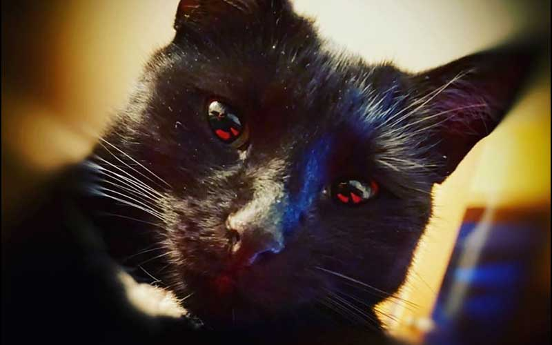 Close up of black cat with red reflected in their eyes
