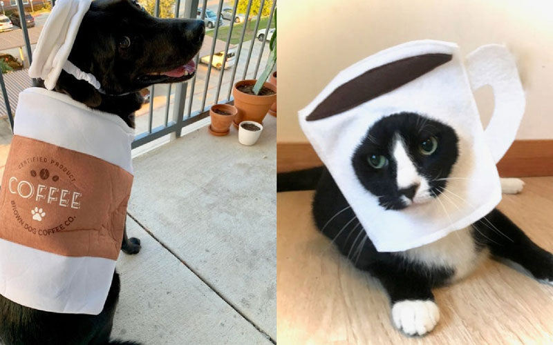 A side by side collage of two photos. The left shows a brown dog in a coffee costume, and the right shows a black cat in a coffee cup mask.