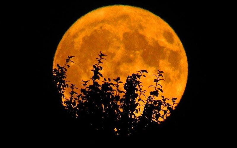 "An orange ""Hunter's Moon"" is showing behind silhouetted trees"
