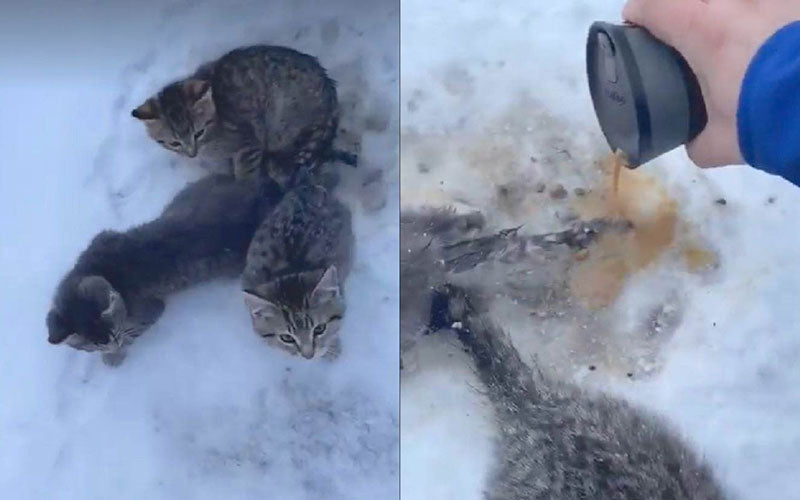 A side by side photo collage, where the left photos shows three kittens frozen in snow, and the right shows a man pouring coffee to thaw the cats from the snow.