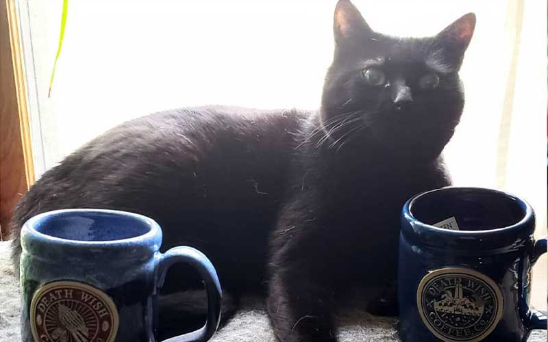 Black cat lying next to a couple Death Wish Coffee mugs
