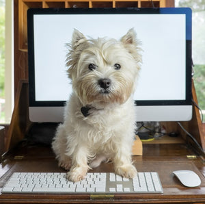my-paleo-pet-dog-with-computer-keyboard-pet-food-2