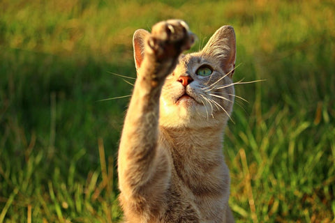 Natural herbs for cats in Boca Raton, FL
