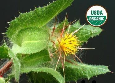 BioComplete™ Blessed Thistle Leaves-My Paleo Pet