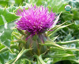 BioComplete™ Milk Thistle Seed Powder-My Paleo Pet