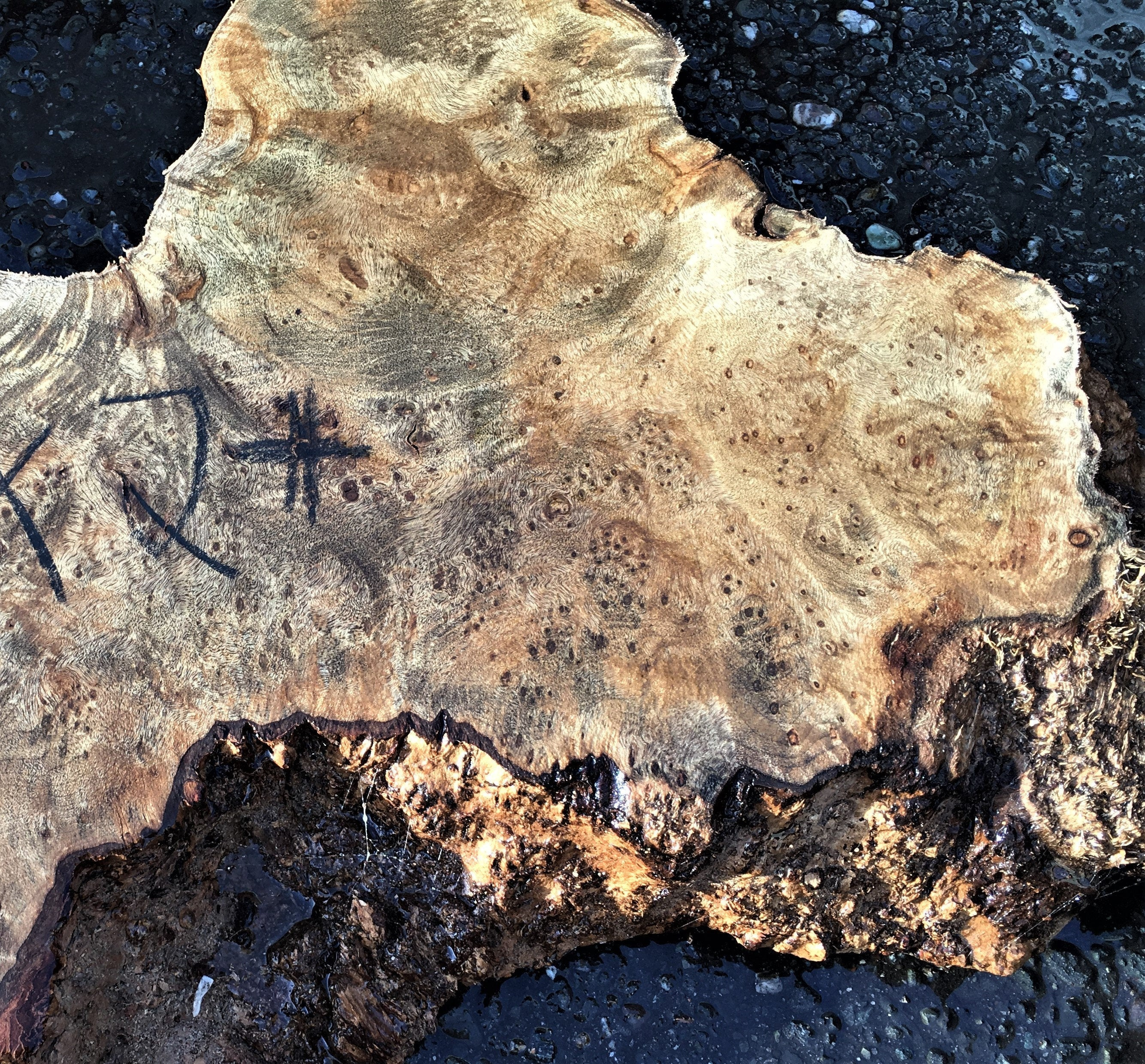 Live Edge Slab | Myrtle burl table | river table top |  bs7014