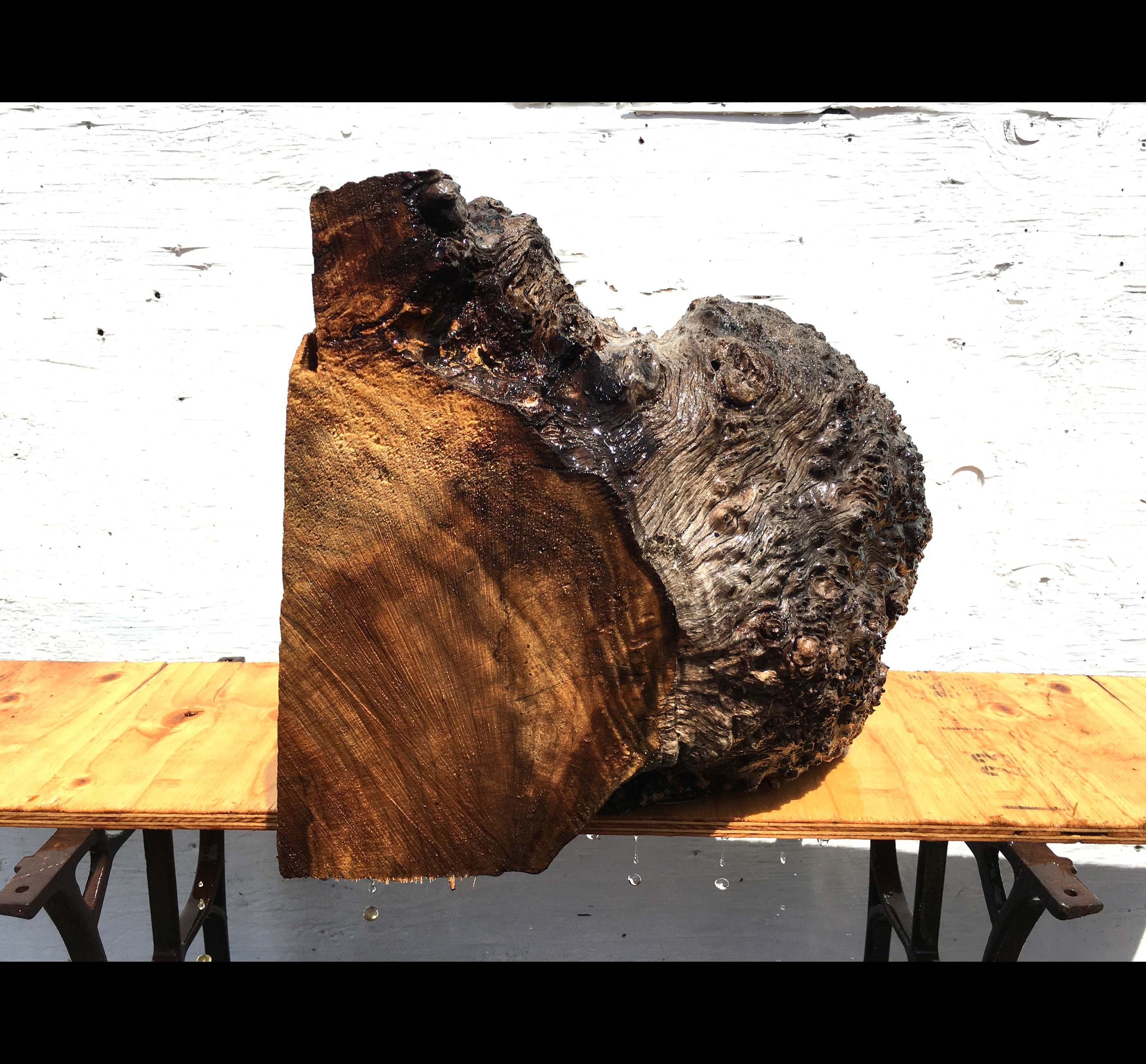 wood turning | spalted Myrtle burl | craft woods - blz570