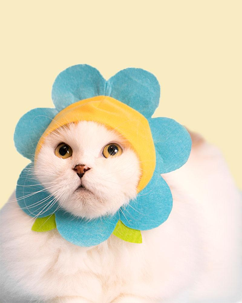 White cat wearing a teal bonnet.