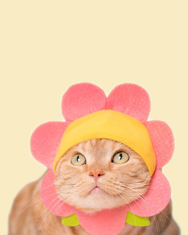 Orange cat wearing a pink flower bonnet.