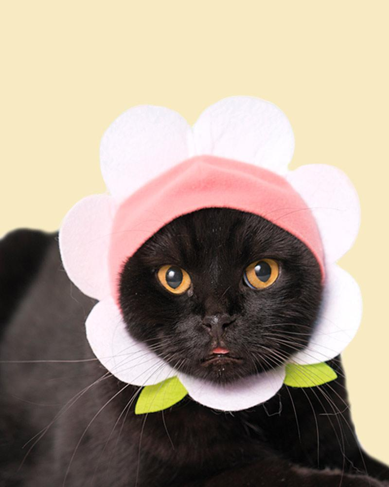 Black Cat wearing a powder pink bonnet.