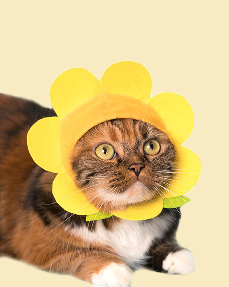 Brown and white cat wearing a yellow flower bonnet.
