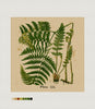 Naturalist Ferns, Needlepoint Cushion, Pillow